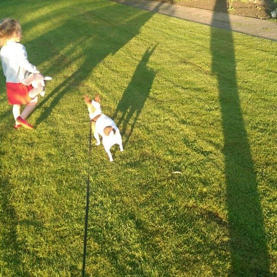 The Essence Of Summer Taking Photos Hello World Hi! Enjoying Life Ilovemydog Jackrusselterrier Dogs Of Hanging Out That's Me Shadowselfie Shadows Funny Funny Pics Funny Moments Daughter Enjoying Nature Scotland