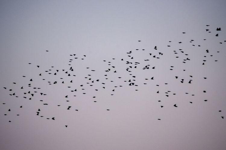 Crowd of common