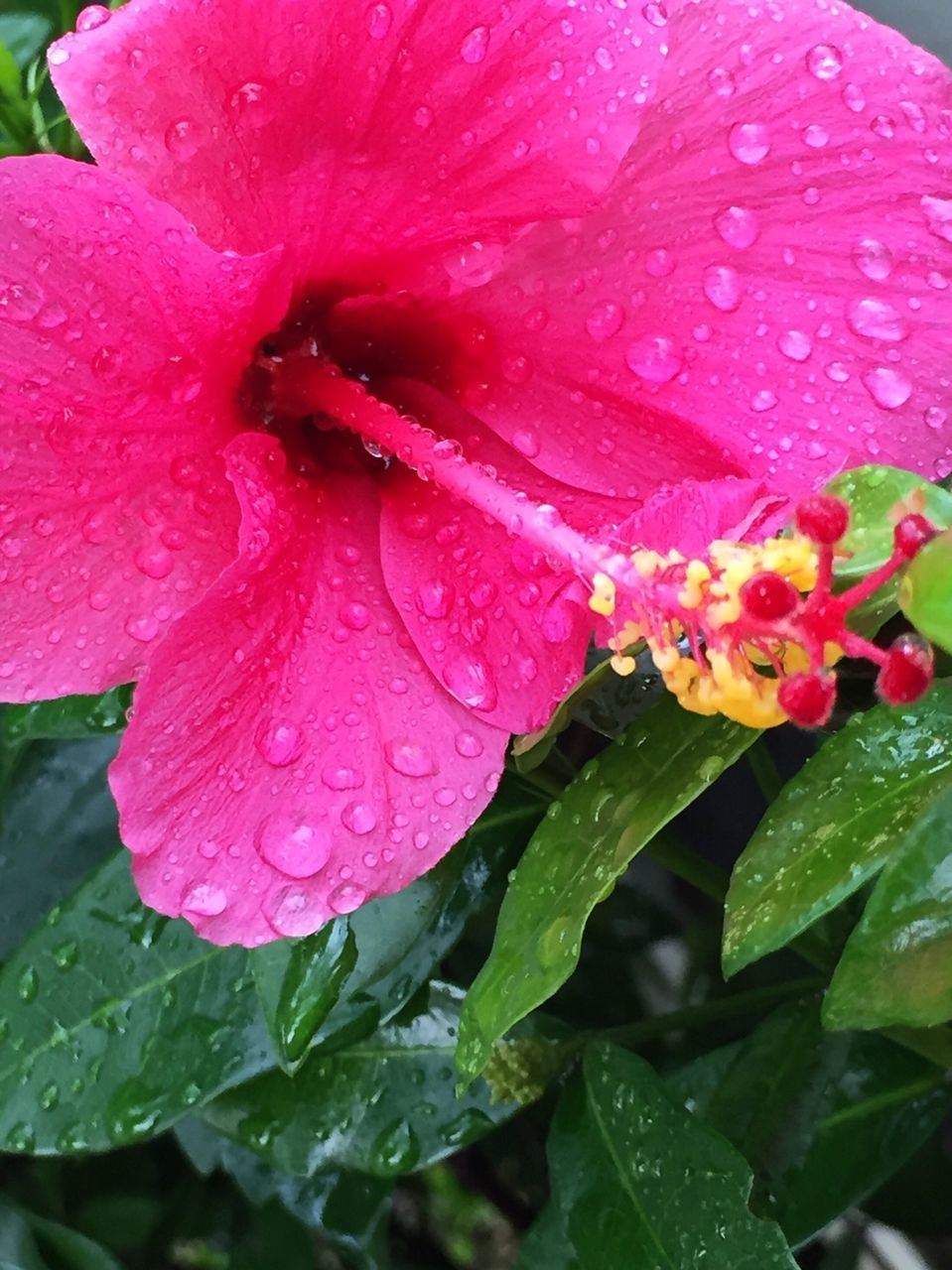 drop, water, wet, growth, petal, freshness, flower, pink color, nature, leaf, raindrop, fragility, beauty in nature, flower head, plant, day, no people, close-up, red, rose - flower, backgrounds, outdoors, blooming, periwinkle