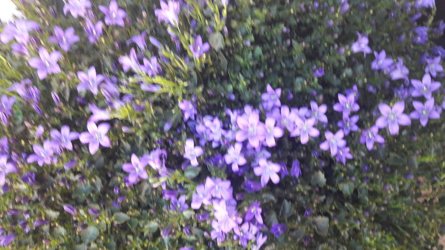 Nature Purple Beauty In Nature Grass Fragility