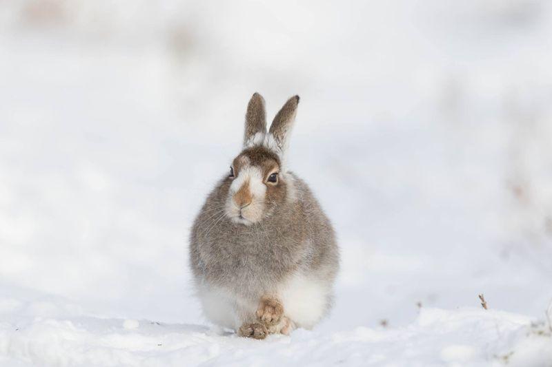 Rabbit Looking Away Outdoors In Winter