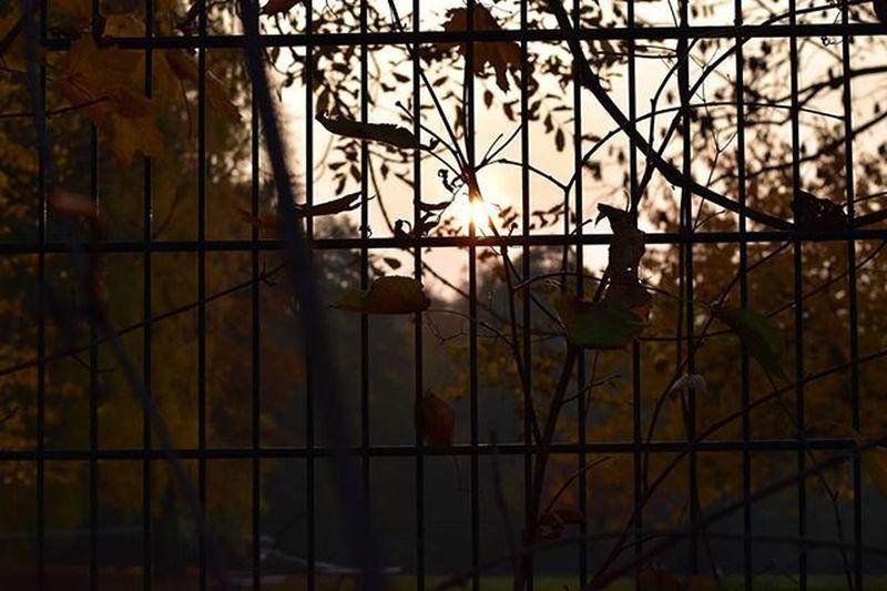 Sonnenuntergang Sunsetsaroundtheworld , Sunset , Glow , Sun , Forrest , Shine , Berlin , Autumn , Herbst , Romantic