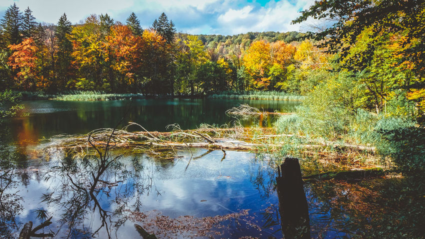 Autumn in Plitvice Autumn Autumn colors Autumn Leaves Lakeview Landscape Photography Nature Nature Photography Plitvice Lakes National Park Reflection Trees Blue Colorful Fall Forest Lake Lake View Lakeshore Lakeside Landscape No People Non-urban Scene Outdoors Plitvice Plitvice National Park Tranquility