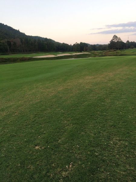 Landscape Grass Beauty In Nature Tranquility Tranquil Scene Nature Field Green Color No People Tree Scenics Growth Outdoors Sky Agriculture Day Golf Course