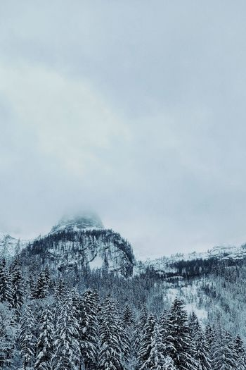 Traveling Travel Wanderlust negative space Eye4photography  EyeEm Best Shots EyeEm Gallery No People Trees Austria Pixelated Snow Winter Cold Temperature Sky Close-up Cloud - Sky Snowing Tranquil Scene Snowcapped Mountain Mountain Range Spruce Tree Foggy Scenics Countryside