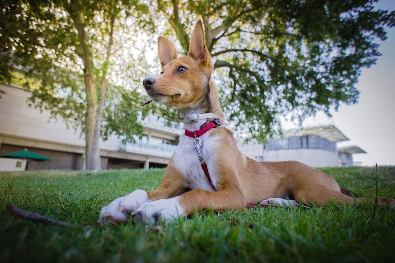 Dog lying on lawn