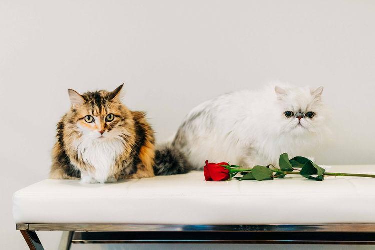 Portrait of cat with kitten