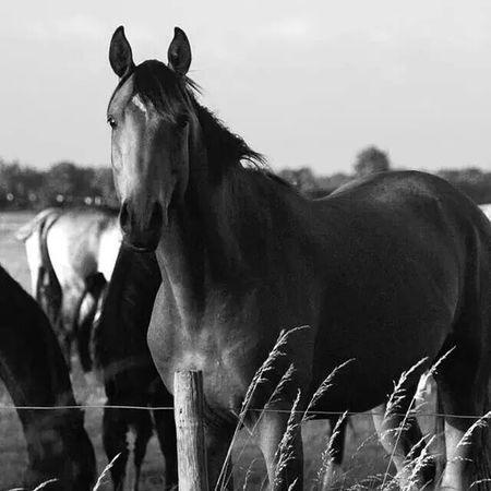 Taking Photos Horse Landscape Beautiful Day