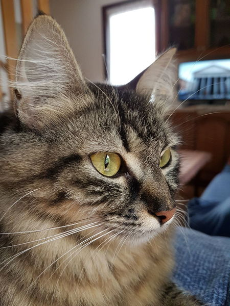 One Animal Domestic Cat Pets Domestic Animals Animal Themes Mammal Feline Close-up Indoors  Portrait Whisker No People Day Pet Portraits