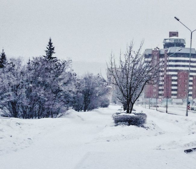 Battle Of The Cities Zelenogorsk Winter Tree Snow Cold Temperature Building Exterior Built Structure Architecture Season  Weather Travel Destinations Tranquil Scene Clear Sky Tranquility Scenics Bare Tree Nature Growth Outdoors Day Tall - High Loneliness