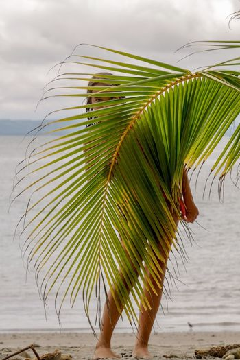 Close-up of palm leaves on beach against sky
