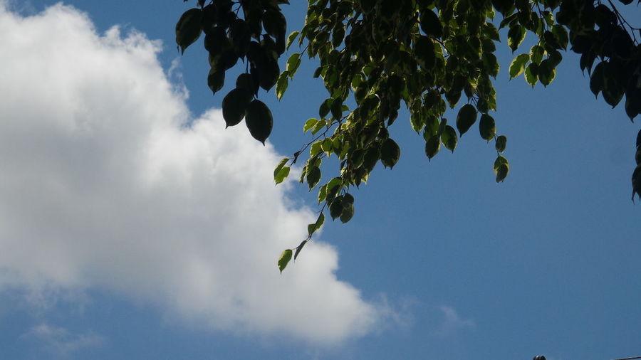 Nofilter Cloud - Sky