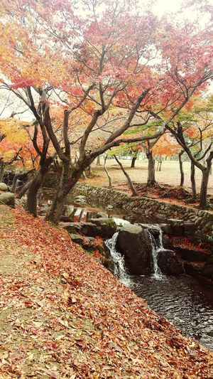 Visit in nara deer Park, Japan.... Autumn🍁🍁🍁 Sweetvacation Taking Photos Moments Lifeisbeautiful Onedayatatime Trip Photo Beautiful ♥ Sweet Moments Enjoying Life Capture The Moment Life's Simple Pleasures... LifeIsGood💜 Love To Take Photos ❤ Randomshot Beauty In Nature Nature Photography Japan Photography Nara,Japan Maple Leaf Autumn Trees Autumn Colors Autumn Leaves