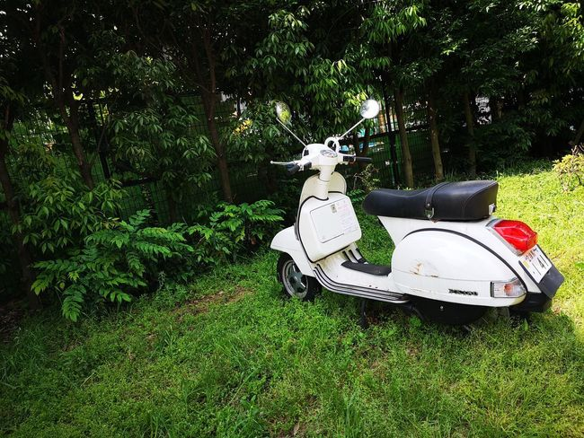 Vespa Animal Car Day Field Grass Green Color Growth Land Land Vehicle Mammal Mode Of Transportation Motor Vehicle Nature No People Outdoors Plant Scooter Stationary Transportation Tree