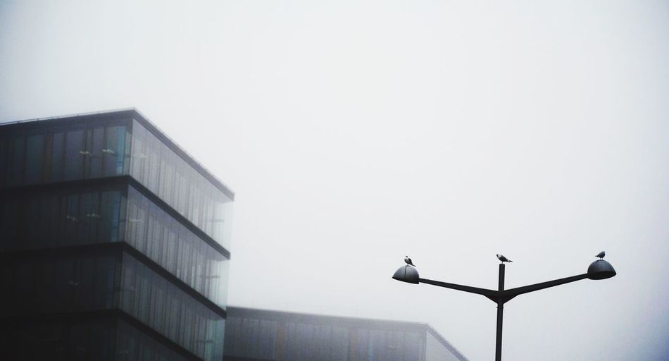 Three Little Birds Foggy Morning Cityscape Monochrome World Urban Landscape Beauty In Ordinary Things Bad Weather Scenery Shots Smart Simplicity The Architect - 2015 EyeEm Awards
