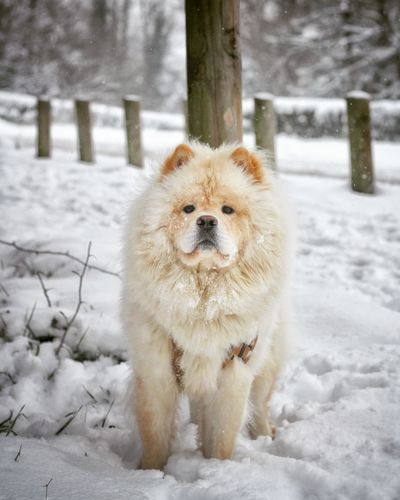 EyeEm Selects Pets Snow Cold Temperature Winter Portrait Dog Snowflake Looking At Camera Snowing White Color