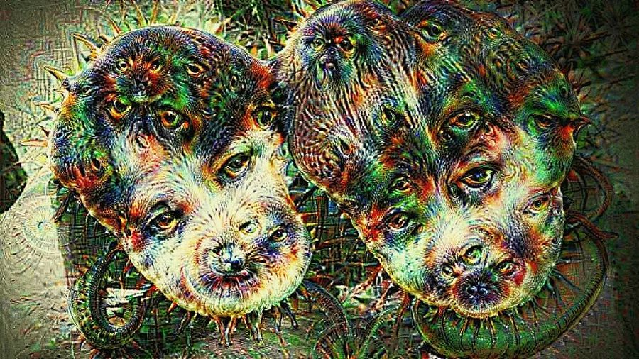 Dreamify My Girls