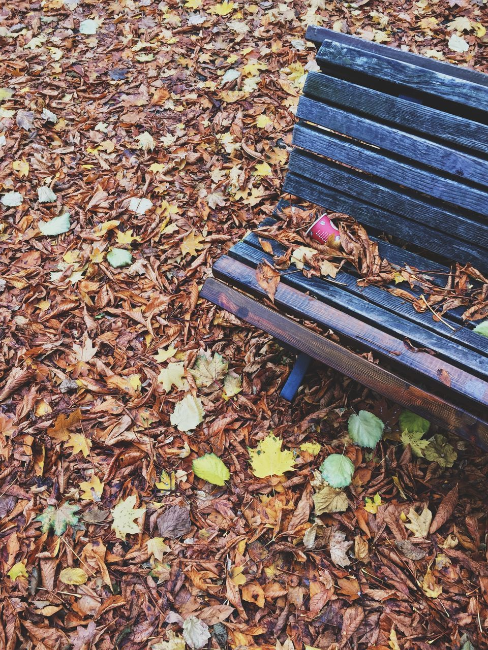 autumn, leaf, change, dry, leaves, no people, day, outdoors, fallen, nature, beauty in nature, close-up, maple