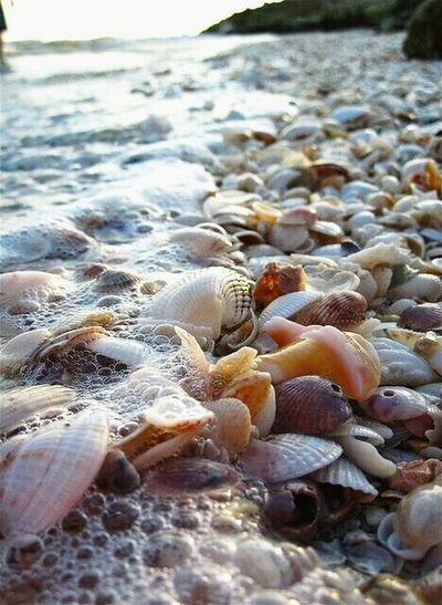 Beach Seashell Sea Nature Pebble Sand No People Beauty In Nature Outdoors Day Water Pebble Beach Sea Life Close-up The Great Outdoors - 2018 EyeEm Awards The Still Life Photographer - 2018 EyeEm Awards