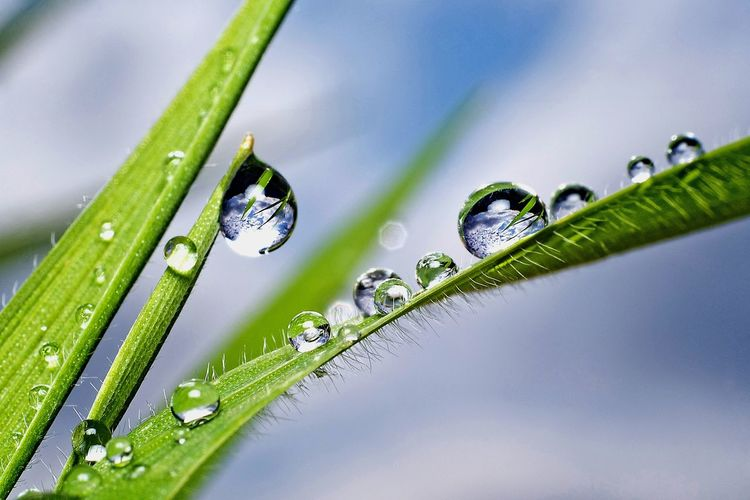 Close-up of wet green plant during rainy season