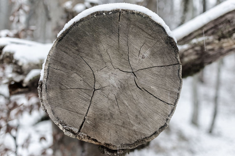 Close-up Cracks Cross Section Day Log Nature Outdoors Snow Textured  Tree Tree Ring Tree Stump Tree Trunk Winter Wood - Material