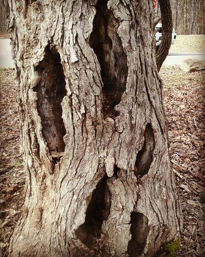 Trees Holes TreePorn Treephotography Treeart Treefaces Taking Photos
