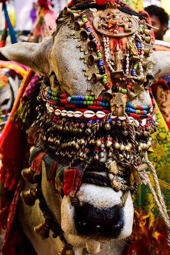 Colours Multi Colored Outdoors Close-up Streetsofindia Indian Street Photography Arts Culture And Entertainment Traditional Festival Cultures Looking At Camera Animal Portrait Focus On Foreground No People Day
