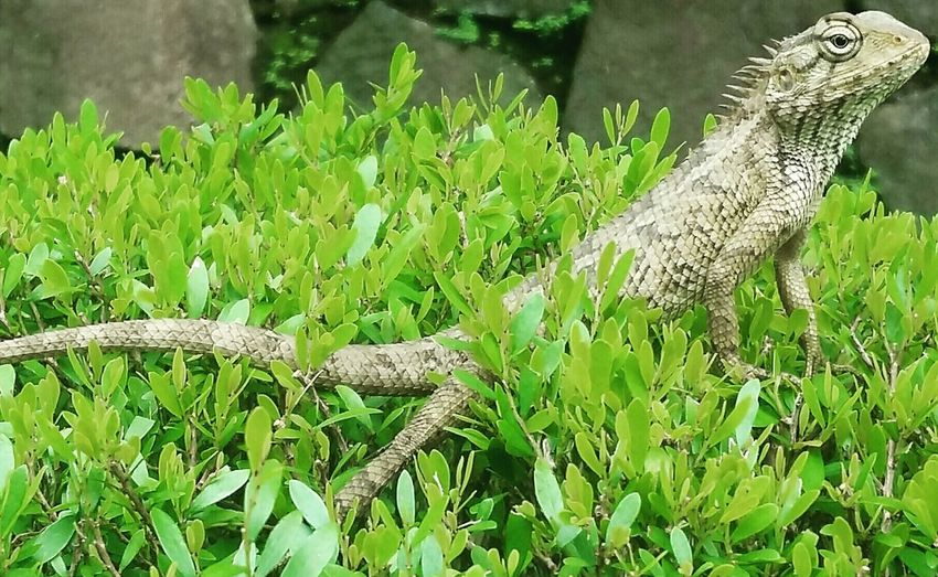 Reptile Grass Nature One Animal Green Color Day No People Animal Wildlife Animals In The Wild Close-up Outdoors Plant Animal Themes
