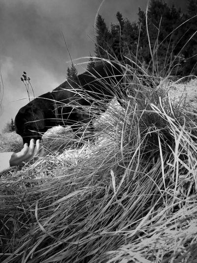 One Person Domestic Animals Dog Bassethound EyeEm Best Shots Blackandwhite Rural Scene Outdoors Megaratto Nature Agriculture Grass Sky Hay Day