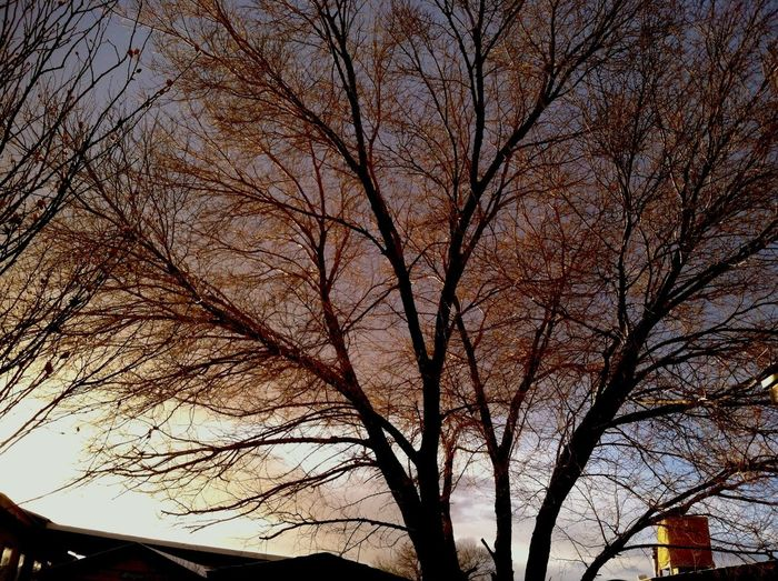 Taking Photos For The Love Of Trees ~ Winter Trees Unfiltered