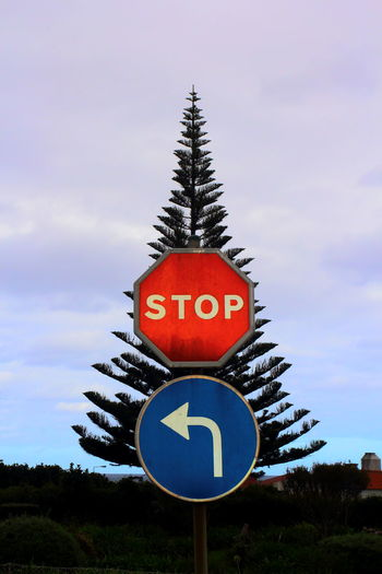 Christmas With A Twist Or How To Decorate A Tree Differently Christmas Decorations Christmas Tree Communication Contasting Colors Day Guidance Illusion Photography No People Outdoors Patterns In Nature Red And Blue Road Sign Sign Sky Stop Sign Symbol Text Tranquil Scene Tree Turn Left Warning Sign Western Script The Drive Adapted To The City