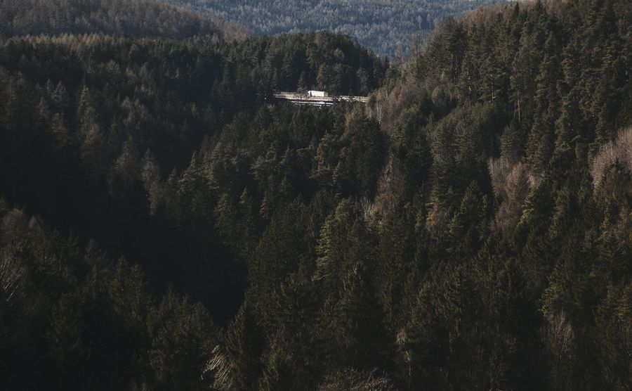 A Truck on the highway Bridge in a vast Forest. Protecting Where We Play Learn & Shoot: Layering Just Around The Corner Looking To The Other Side Aerial Shot Deceptively Simple Seeing The Sights My Best Photo 2015 Landscapes With WhiteWall A Bird's Eye View