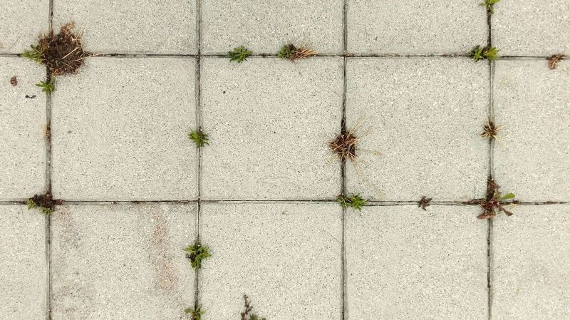 Floor Growth Plant Outdoors Nature Fragility Nature Textured  Wall Decoration Textured  Floor Photography Textures And Surfaces Colored Background