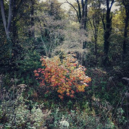 No People Tree Nature Autumn Chorley Astley Park Lancashire Autumn🍁🍁🍁 Lovelancashire Beauty In Nature Textured  Growth Day Outdoors Nature Beauty In Nature