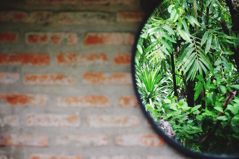 Close-up of potted plant reflecting on mirror against brick wall