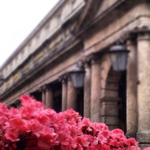 Via Roma oltre i fiori Flowers Fiori Spring Primavera Verona Art Contrasti Opposition Passatoepresente Pastandpresent