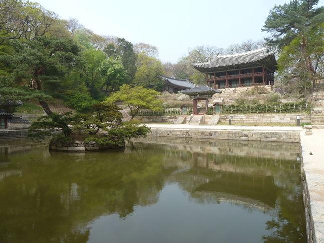 Changdeokgung Changdeokgung Palace Day Garden Garden Photography Gardens Koreanarchitecture Koreangarden Outdoors Royalgardens Tree