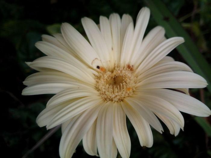 Flower Freshness Wildlife Close-up Beauty In Nature Single Flower Blossom