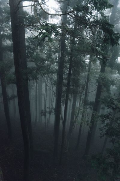 Japan Nature_collection Japan Photography EyeEm Gallery EyeEm Best Shots Forest Tree Nature Beauty In Nature From My Point Of View Nikon Foggy Fog