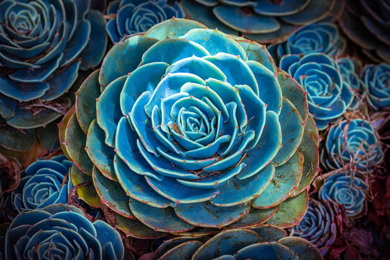 Close-up of succulent plant in sea