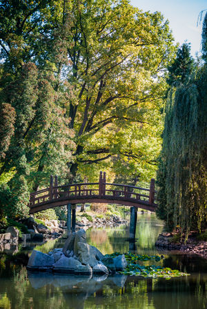Bridge in Wrocław's Japanese Garden Architecture Beauty In Nature Bridge Connection Day Growth Lovers Bridge Nature No People Outdoors Reflection Romantic Scenics Sky Tranquil Scene Tranquility Travel Destinations Water Wroclove
