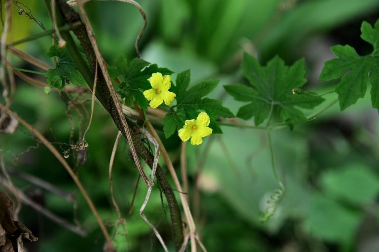 Outdoors Flower Close-up No People Plant Part Day Beauty Tree Beauty In Nature Nature Plant Green Color