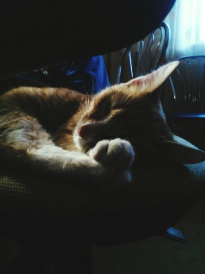 Check This Out Cat♡ Red Cat Kitty Sleeping Sleepy Sleepy Cat Cute Pets Cute