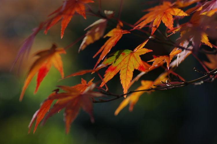 天龍寺 紅葉2016 紅葉 紅葉🍁 Nature_collection Nature Photography Autumn Beauty In Nature Nature Maple Leaf Nature Beauty In Nature