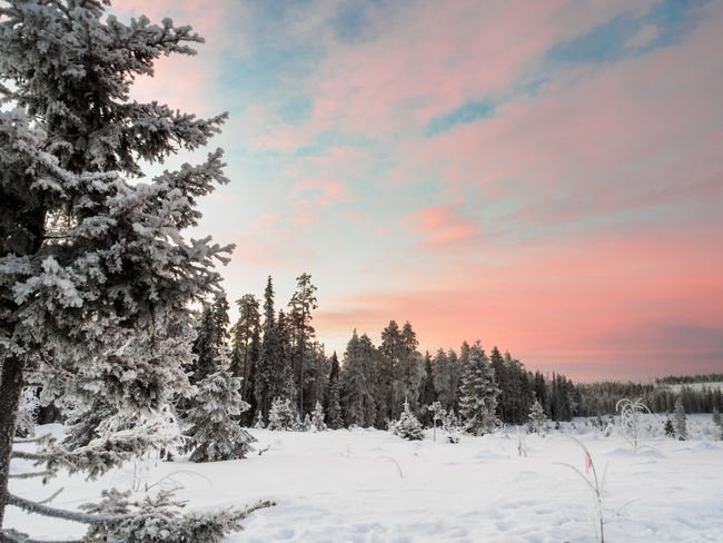 Beauty In Nature Cold Temperature Nature No People Outdoors Sky Snow Winter