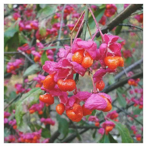 Съела бы эти ягодки! 🔴🔴🔴 VSCO EyeEm Autumn Fall осень Autumn Colors краски осени