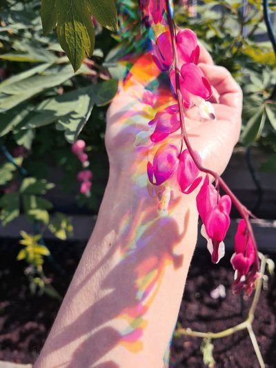 Close-up of hand holding multi colored flowers