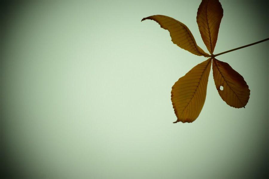 生きる Life Force Day 日常 Leaf Nature Beauty In Nature Nature Beauty In Nature Plant