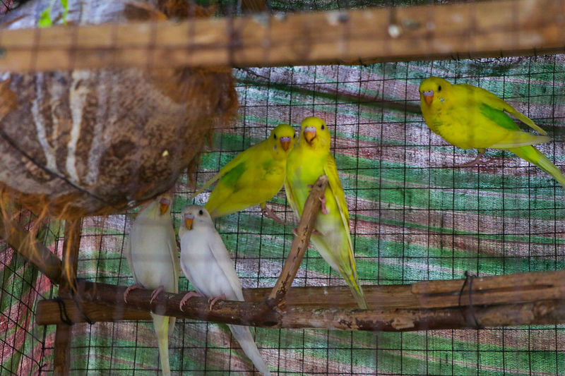 Animal Themes Animal Wildlife Animals In The Wild One Animal No People Nature Cage Day Insect Outdoors Bird Perching Close-up Jade Bird