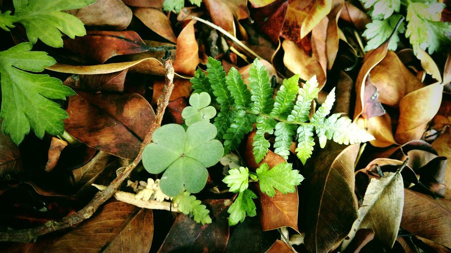 Leaf Green Color Nature Beauty In Nature Outdoors Leaf Vein Tunghai University